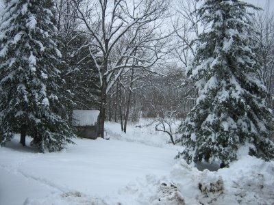 snowy swanville woods